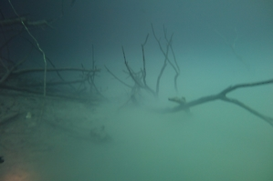 Drowned trees emerging through the sulfide layer - spooky!