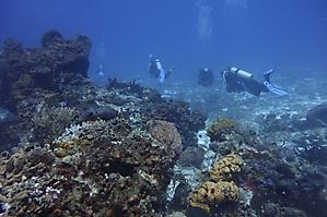 Paseo Del Cedral (Cedar Pass) reef