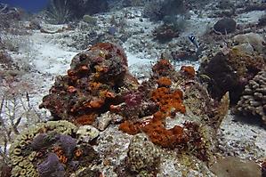 Simone Cousteau Reef_1