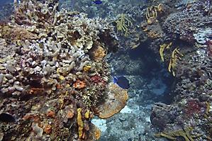 Simone Cousteau Reef_2